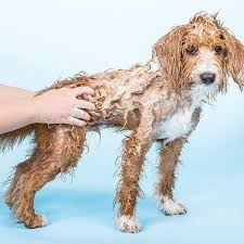 ETHIQUE SHAMPOOCH SHAMPOO FOR SENSITIVE DOGS